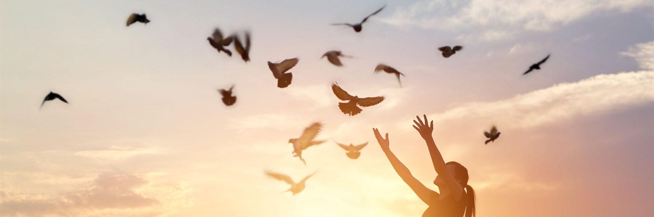 Etre libre et relié, prendre son envol, revivre après un choc Psychothérapie corps esprit Somatic Experiencing Florencedewulf
